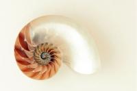 Poem - Terre de Vie (Nautilus)