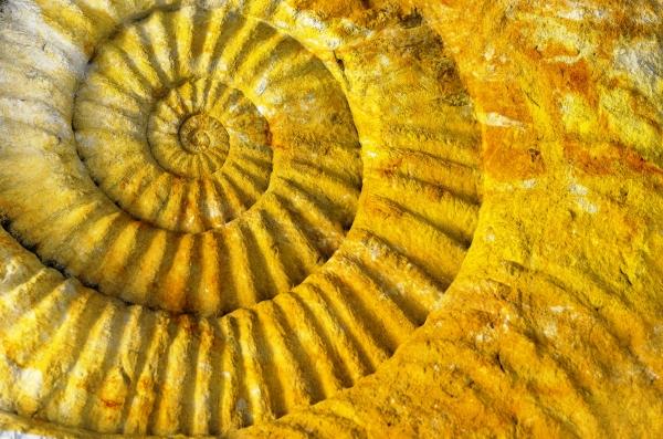 Article - J'aime la Biodanza (Ammonite prehistoric fossil)